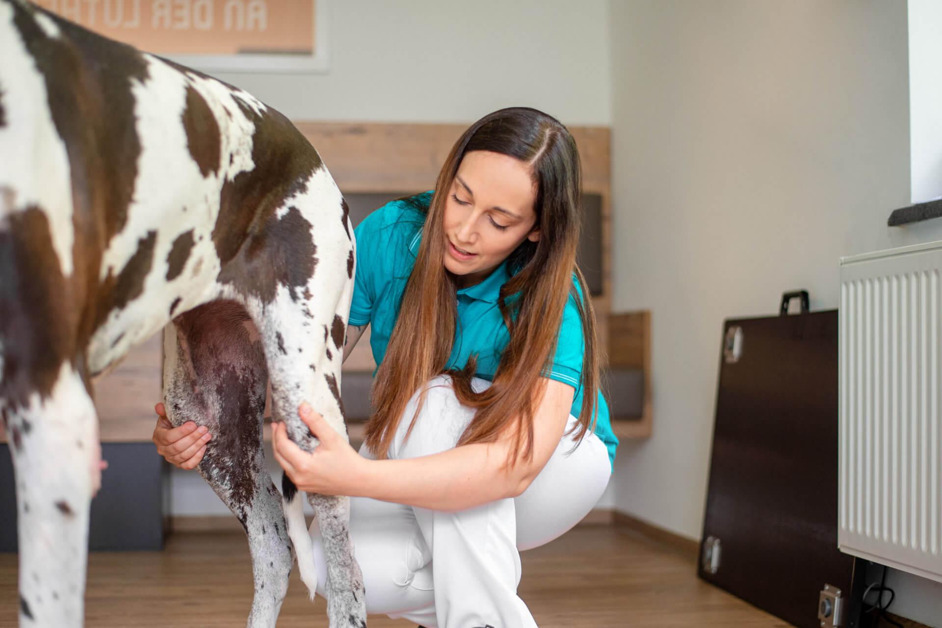 Operation Hund Katze Tierarzt