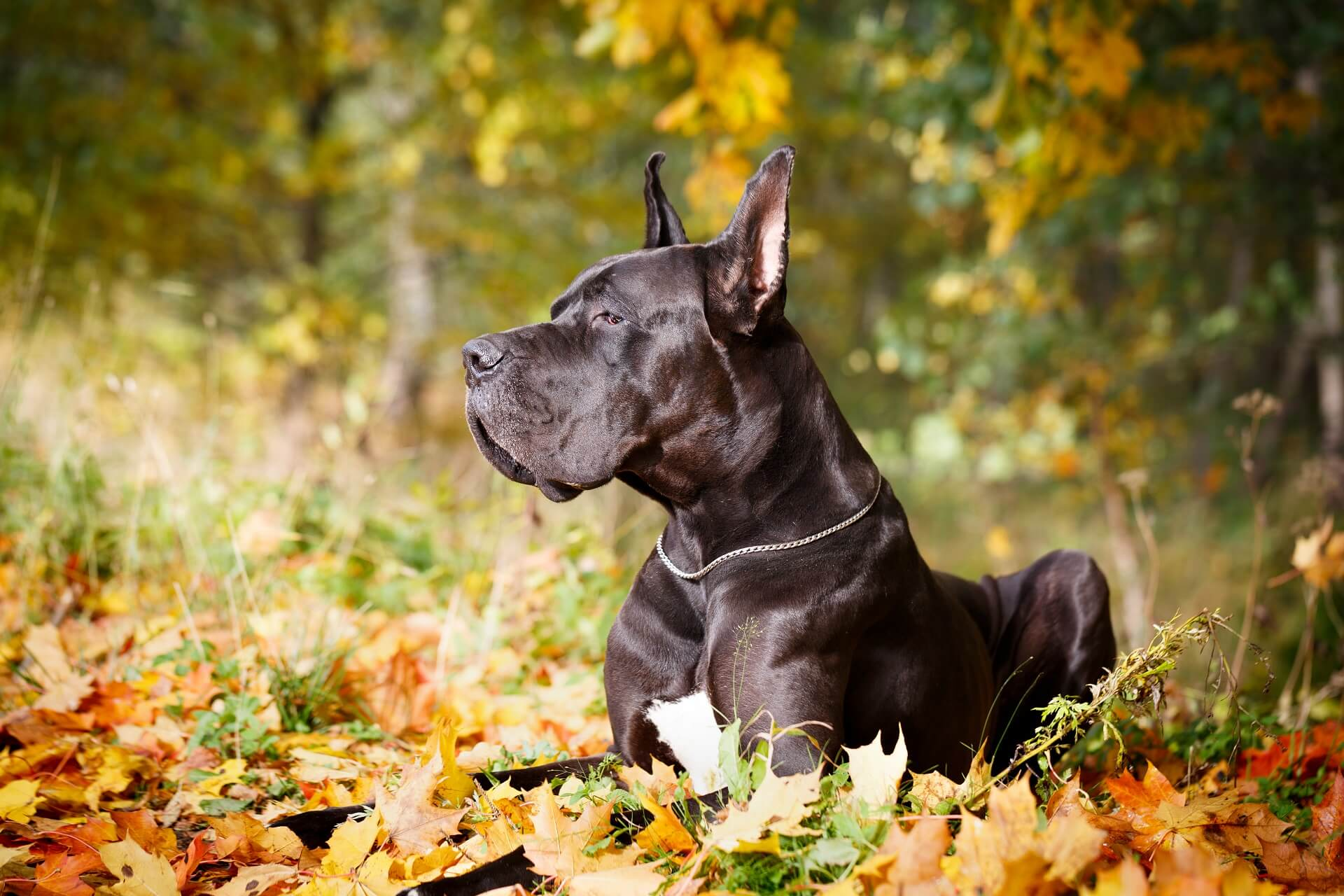 Minimalinvasive Chirurgie Hund Operation