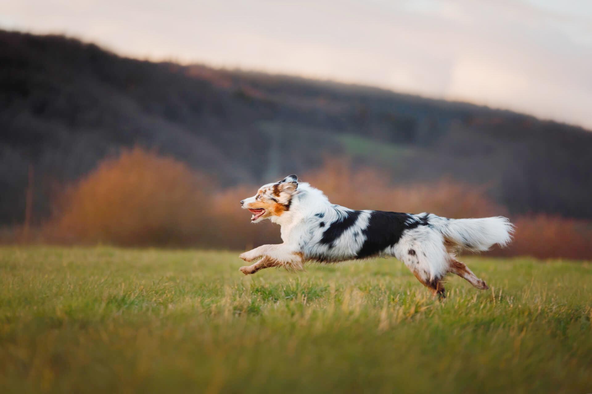 Mobile-Kleintierchirurgie-Hunde